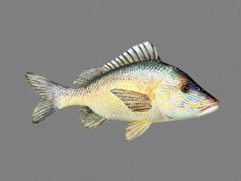 White Grunt Fish Animated 3d preview