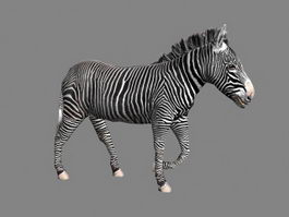 Animated Zebra 3d preview