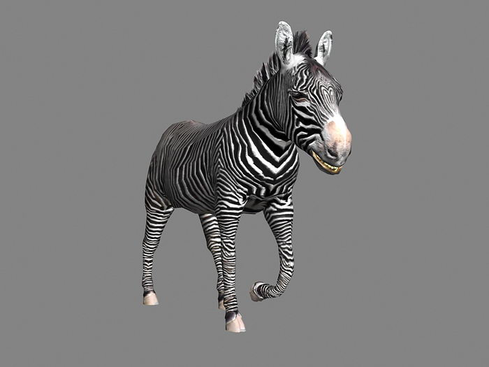 Animated Zebra 3d rendering