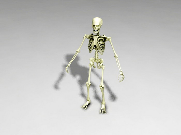 Full Human Skeleton 3d rendering
