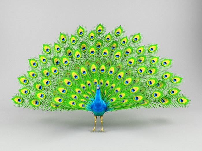 Green Peafowl 3d rendering