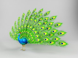 Green Peafowl 3d preview