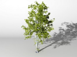 American Ash Tree 3d preview