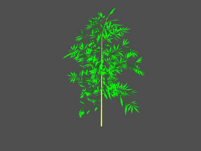 Bamboo Plant 3d rendering