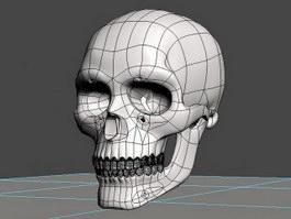 Skeleton Skull 3d preview