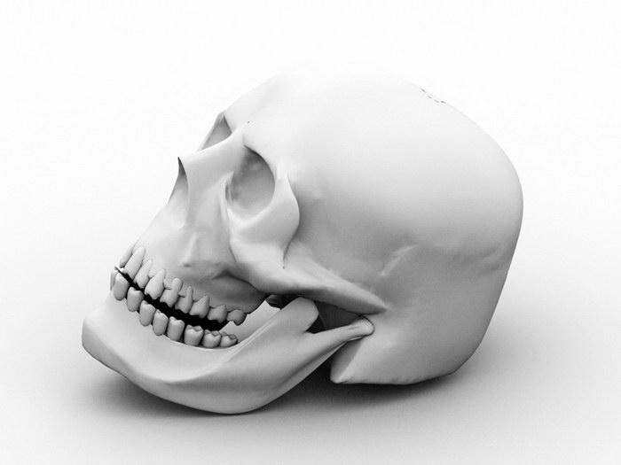 Human Male Skull 3d rendering