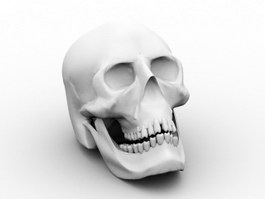 Human Male Skull 3d preview