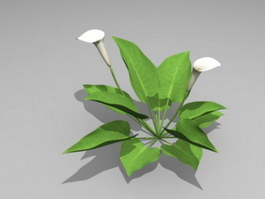 White Calla Lily Plant 3d preview