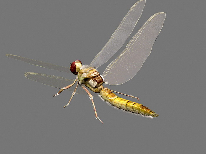 Yellow Dragonfly 3d rendering