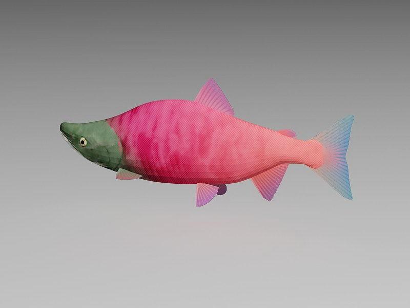 Sockeye Salmon Fish 3d rendering