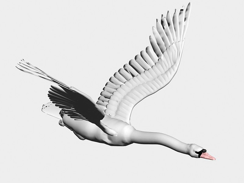 Fly Swan Bird 3d rendering