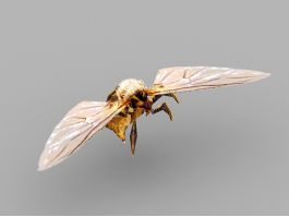 Orange Hornet 3d preview