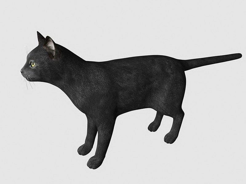Black Cat 3d rendering