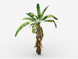 Small Banana Tree 3d preview