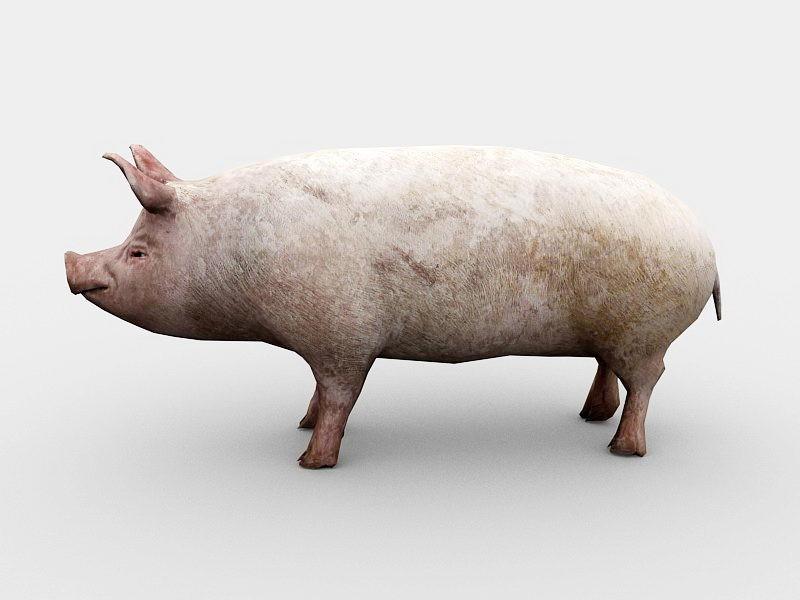 Adult Pig 3d rendering