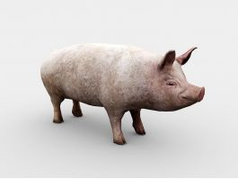 Adult Pig 3d preview