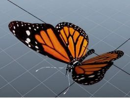 Orange Butterfly 3d preview