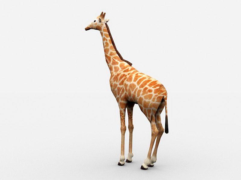 Beautiful Giraffe 3d rendering