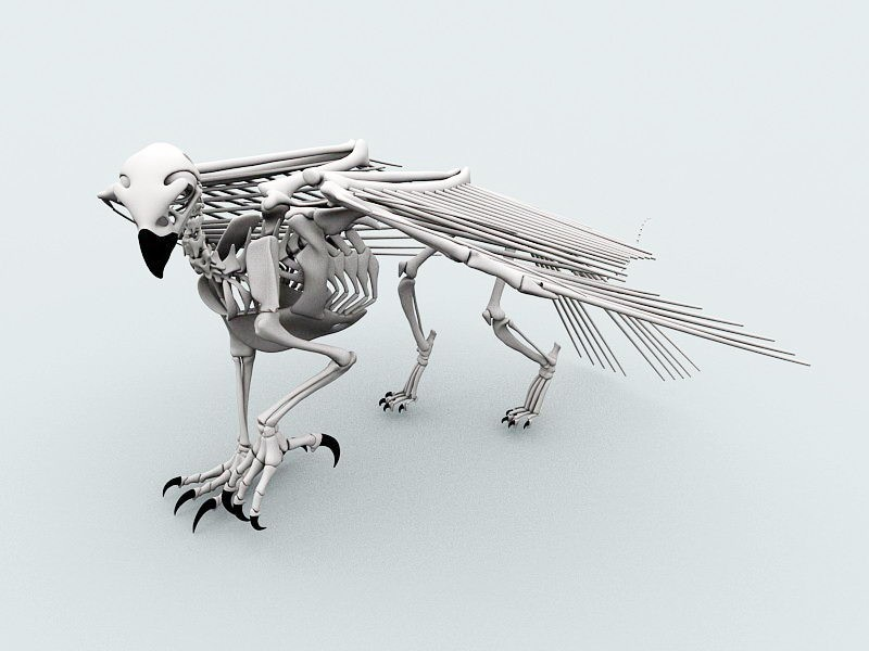 Bird Skeleton 3d rendering