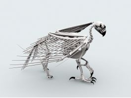 Bird Skeleton 3d preview