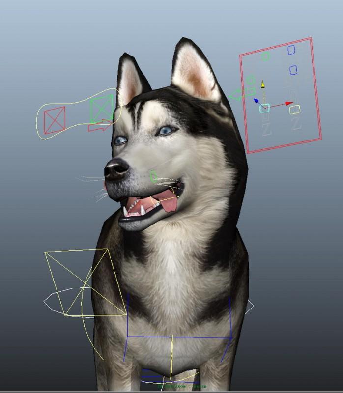 Siberian Husky Dog Rig 3d rendering