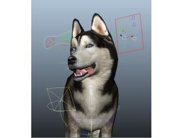 Siberian Husky Dog Rig 3d preview