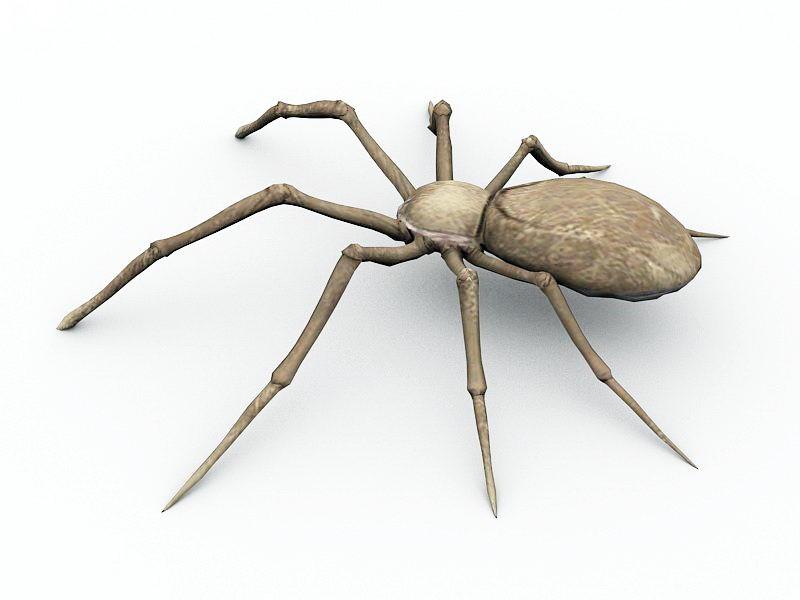 Desert Spider 3d rendering