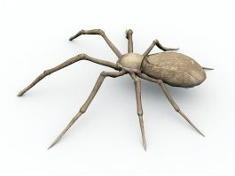 Desert Spider 3d preview