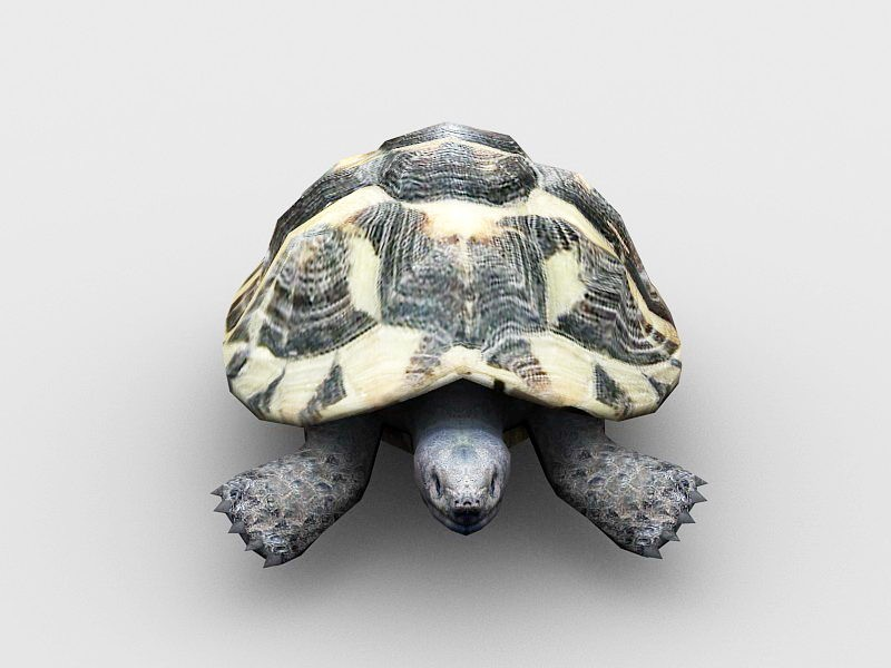 Green Sea Turtle 3d rendering