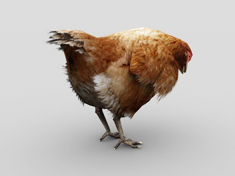 Female Chicken 3d rendering