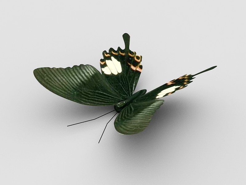 Animated Butterfly 3d rendering