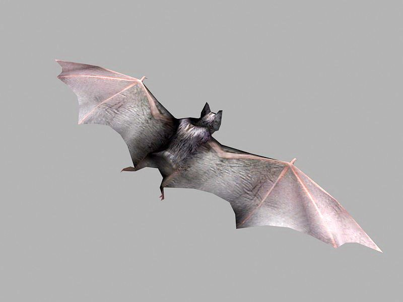 Brown Bat 3d rendering
