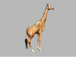 Wild Giraffe 3d preview
