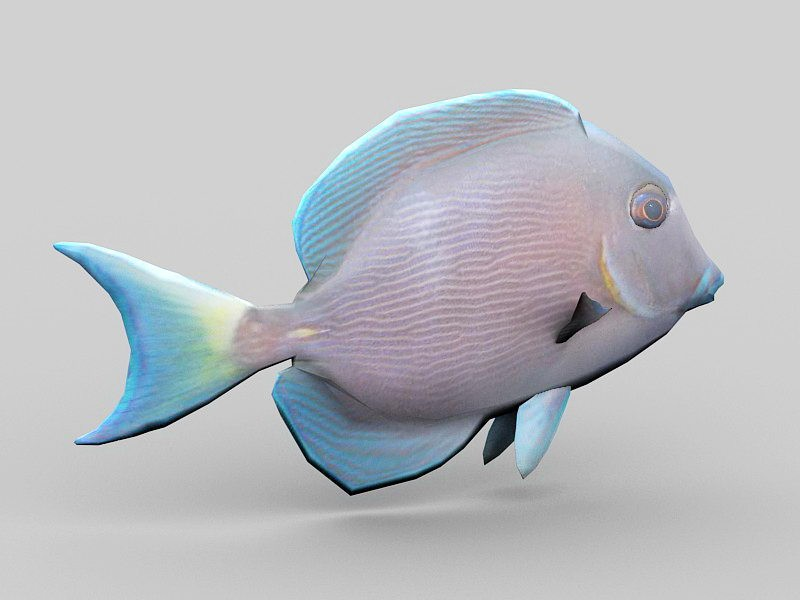Animated Blue Tang Fish 3d rendering
