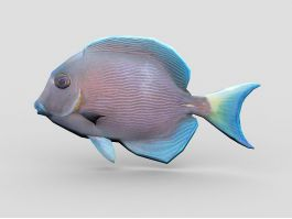 Animated Blue Tang Fish 3d preview