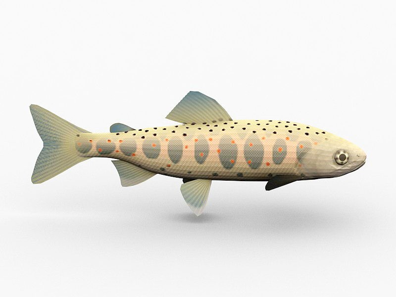 Amago Salmon Fish 3d rendering