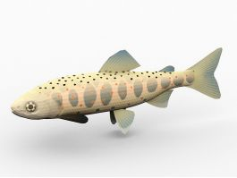 Amago Salmon Fish 3d preview