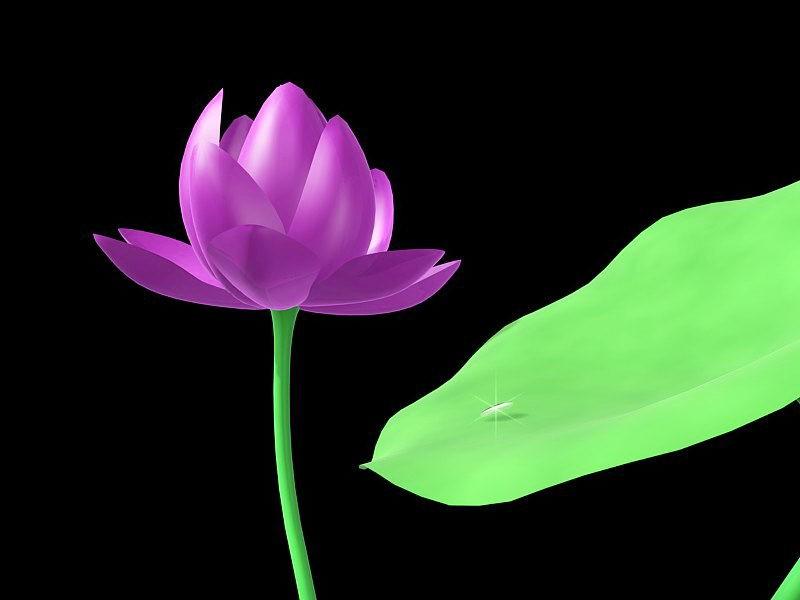 Flower Lotus Water Lily 3d rendering
