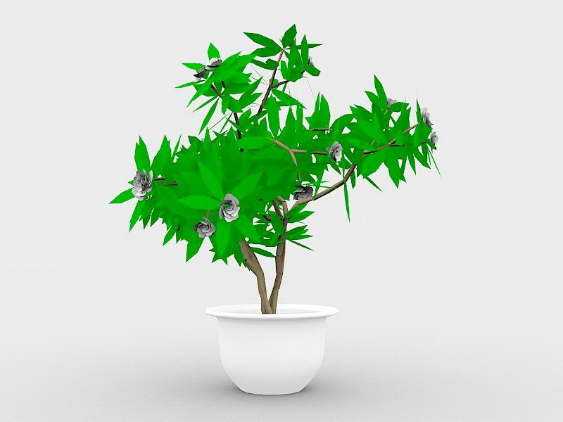 Large Indoor Potted Plant 3d rendering