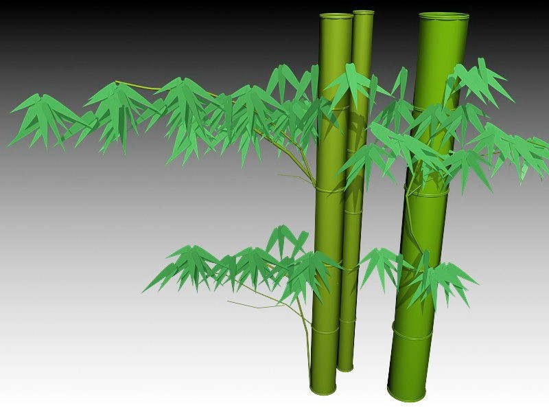 Growing Bamboo 3d rendering