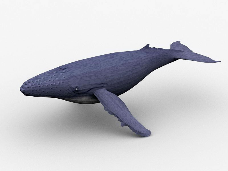 Humpback Whale 3d rendering