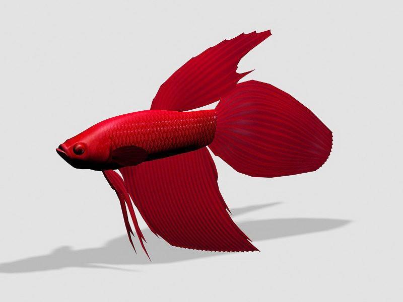 Red Betta Fish 3d rendering