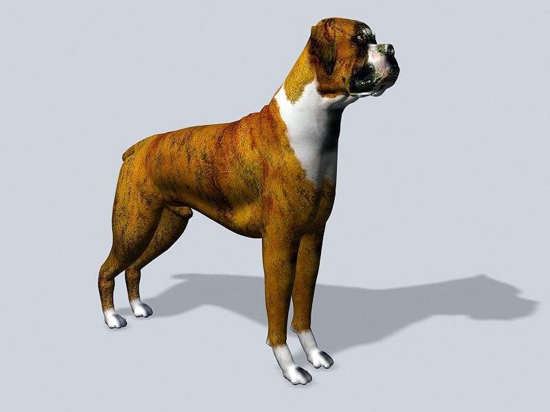 Male Bulldog 3d rendering