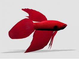 Red Betta Fish 3d preview