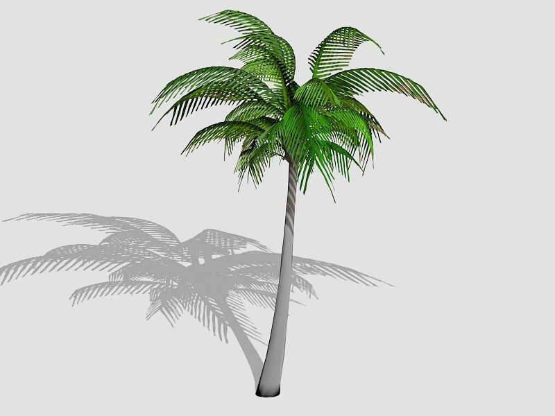 Tall Coconut Tree 3d rendering