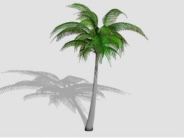 Tall Coconut Tree 3d preview