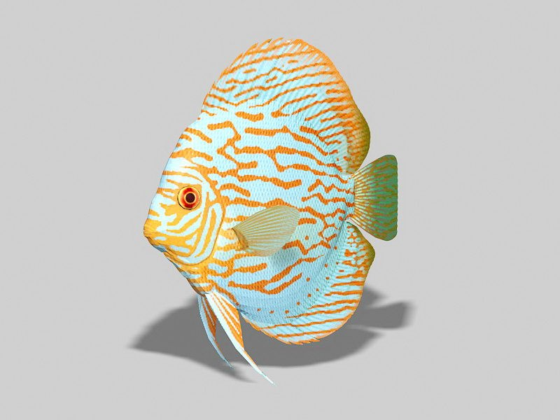 Red Turquoise Discus Fish 3d rendering