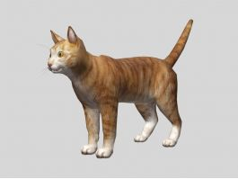 Cute Orange Cat 3d preview