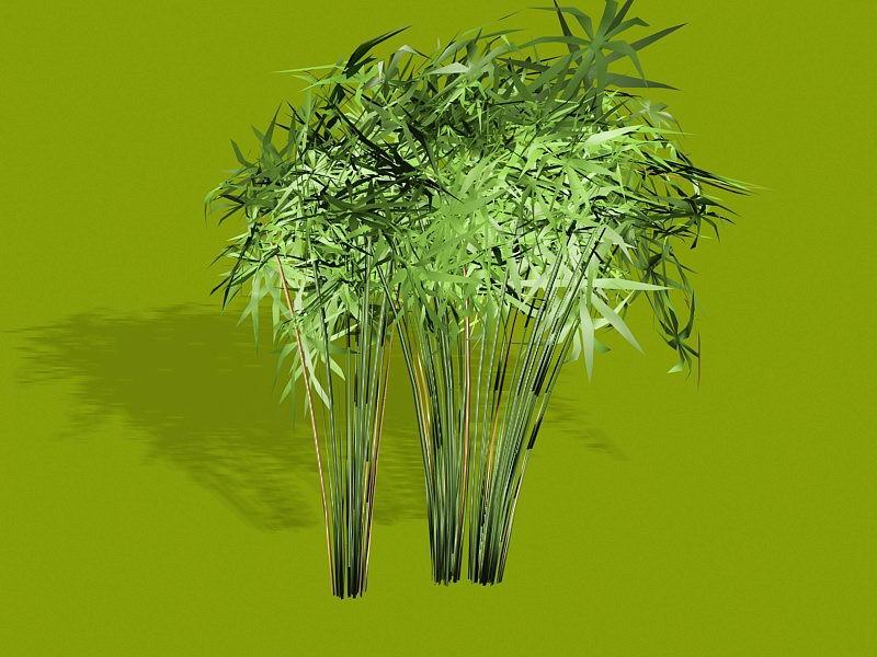 Papyrus Plants 3d rendering