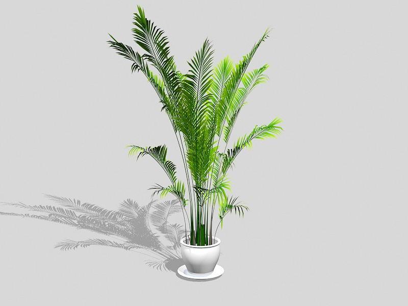 Chamaedorea Palm HousePlant 3d rendering